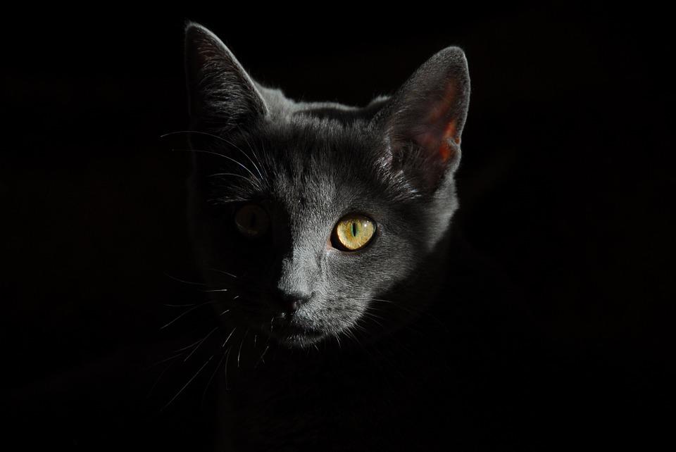 cat-778315_960_720